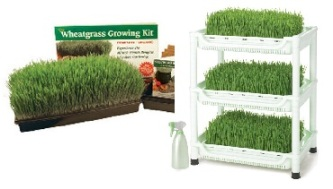 ashh - blog - wheatgrass 1